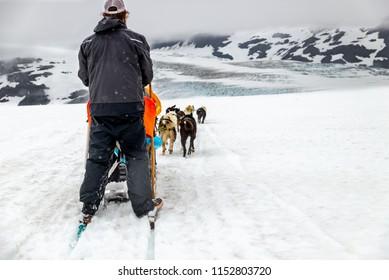 Alaskan Glacier dog sled