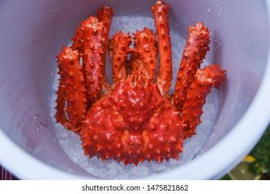 Alaskan King Crab on ice bucket top view / red crab hokkaido at seafood market