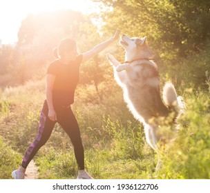 Alaskan malamut dog playing with owner girl and standing on its hind legs in the sunny field nature