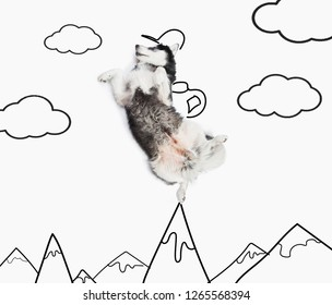alaskan malamute dog as a turist on the top of drawing moutians. Isolated on white background
