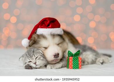 Alaskan malamute puppy wearing santa's hat hugs kitten. Pets sleep together on festive background
