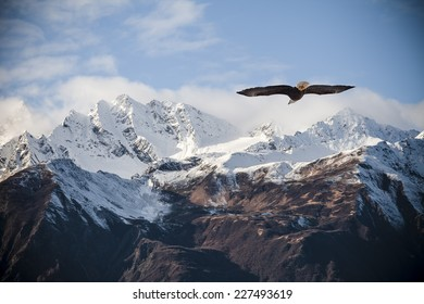 Alaskan mountain peaks dusted with snow with a flying bald eagle in fall.
