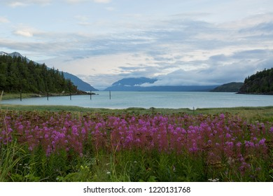 Alaskan scenic view of lake with cloud covered mountains in the background with beautiful pick fireweed in the foreground during the summer, near Haines, Alaska.