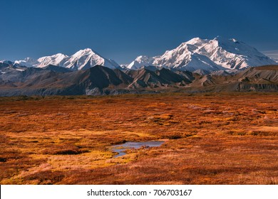 alaska's mount denali on a clear blue sky day, with early autumn colors on mossy tundra in foreground