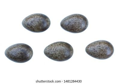 Alauda arvensis. The eggs of the Skylark in front of white background, isolated. Russia. Russia, the Ryazan region (Ryazanskaya oblast)
