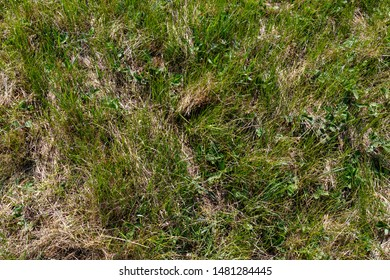 Alauda arvensis. Nest Habitat of Skylark. Landscape.Russia. Russia, the Ryazan region (Ryazanskaya oblast)