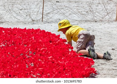 Albany, Western Australia - Nov 31, 2014: A young boy play respect to thirty thousand poppies commemorating the ANZAC soldiers who sailed from Albany 100 years earlier to the European Wars.