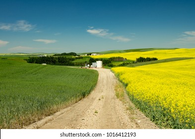 Alberta, Canada.  Access road to gas well site between two fields in springtime.