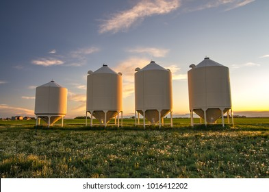 Alberta, Canada.  Four grain silos at sunset in springtime.