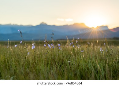 Alberta, Canada.  Purple wildflowers in a meadow at sunset in the Foothills of the Rocky Mountains in summer.
