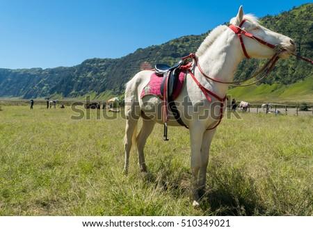 Albino Horse Bromo Tengger Semeru National Stock Photo Edit Now