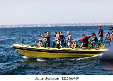 Albufeira, Portugal - Juny, 2018: Common bottlenose dolphin swimming near dolphin watching experience boat by the coast of Albufeira.