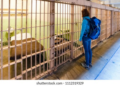 Alcatraz island / United States of America - May 11 2018:  Young woman is looking inside the prison cells in Alcatraz prison in San Francisco, United States of America