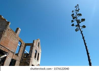 Alcatraz warden house ruins and the tree San Francisco.jpg