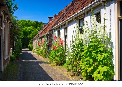 Alcea rosea flowers standing against houses in a street