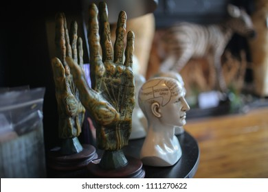 Alchemy Palmistry Hand Model for Fortune Telling Palm Reading and a Phrenology Head Bust