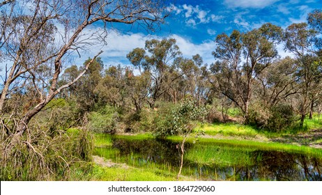 The Alcoa Wellard wetlands provide a refuge for water birds during autumn when hot summer weather has dried up other wetlands on the Swan Coastal Plain.