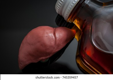 Alcoholic liver damage and cirrhosis concept with a liver next to a flask of alcohol. Cirrhosis is most commonly caused by alcoholism, hepatitis B or C or non-alcoholic fatty liver disease