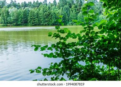Alekseyevskaya Grove hiking trail in Losiny Ostrov National Park near Moscow, Russia - Shutterstock ID 1994087819