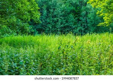 Alekseyevskaya Grove hiking trail in Losiny Ostrov National Park near Moscow, Russia - Shutterstock ID 1994087837