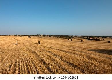 Alentejo Portugal Agriculture