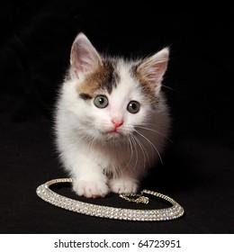 alert cat sits on a necklace