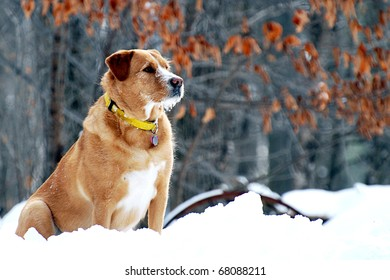 Alert dog on guard in a winter forest