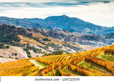 Alexander Valley Autumn - Amber vineyards paint the sides of the Alexander Valley, with Mount St. Helena in the background. Sonoma County, California, USA