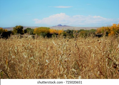 Alfalfa Field with Distant Mountains