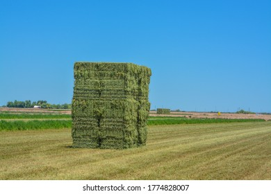 Alfalfa Hay, grown, Baled, ready to be shipped to feed stores. Goodyear, Maricopa County, Arizona USA