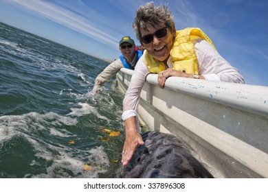 ALFREDO LOPEZ MATEOS - MEXICO - FEBRUARY, 5 2015 - hands while caressing and touching a grey whale mother and calf resting for milking