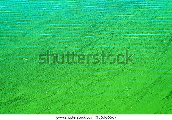 algae-blooms-flow-water-due-600w-3560665
