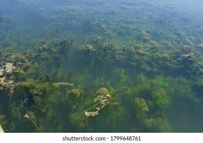 Algae Blooms in Lake Erie