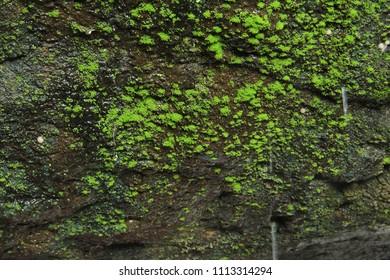 Algae in forest
