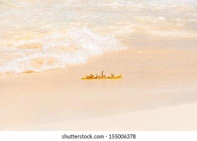 Algae on the beach