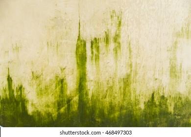 Algae on wall