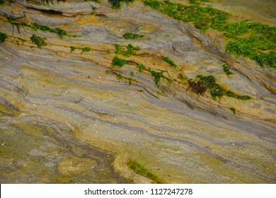 Algae and seaweed on striated sedimentary beach rocks at Devil's Punchbowl,  Otter beach, Newport, Oregon