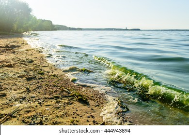 algal blooms, green surf beach on the lake