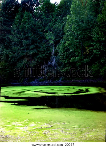 Alge Pond