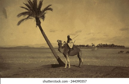 Algerian camel rider next to a palm tree in a desert landscape. Photo attributed to Tancrede R. Dumas between 1860-1900.