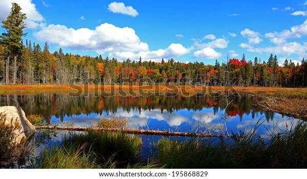 カナダ・オンタリオ州アルゴンキン州立公園