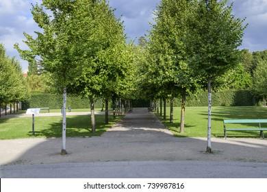 Alignment of trees in the park-garden complex Belvedere.Vienna. Austria