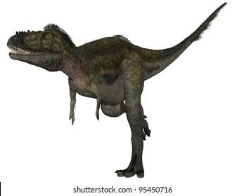 Alioramus - 3D Dinosaur