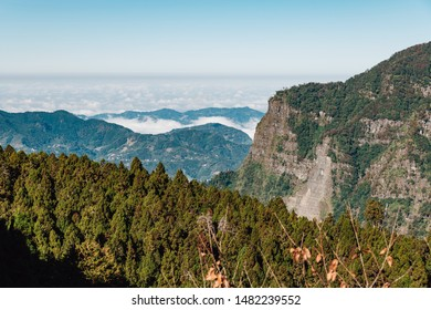 Alishan Mountain with low cloud and fog on mountain in background and Japanese Cedar Forest in foreground in Alishan, Taipei.