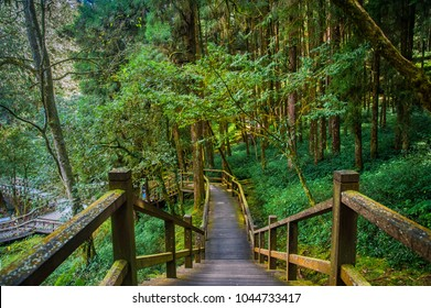 Alishan National Park Scenic Area, Chiayi Province, Taiwan