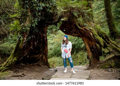 Alishan National Scenic Area, Chiayi Province, Taiwan, 20 July 2019: tourists take pictures at  Alishan National Scenic Area. Taiwan.