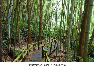 Alishan National Scenic Area in Taiwan - bamboo forest trail in Fenqihu (also known as Fenchihu).
