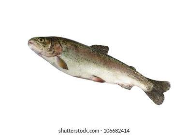 alive trout on white background