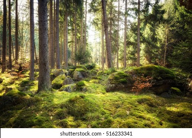 In all its freshness - Forests after winter