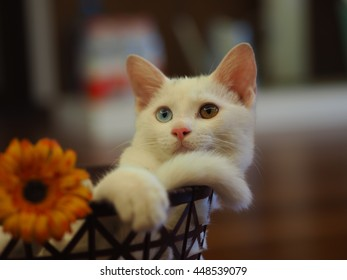 All kinds of cute poses from a little white cat